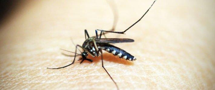 096 – Ungeziefer im mobilen Heim Teil 2 – Fliegen und (Stech)mücken